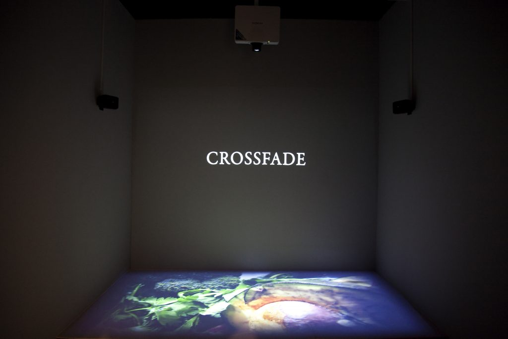 Mario Asef at Daegu Photo Biennale in Korea showing Crossfades