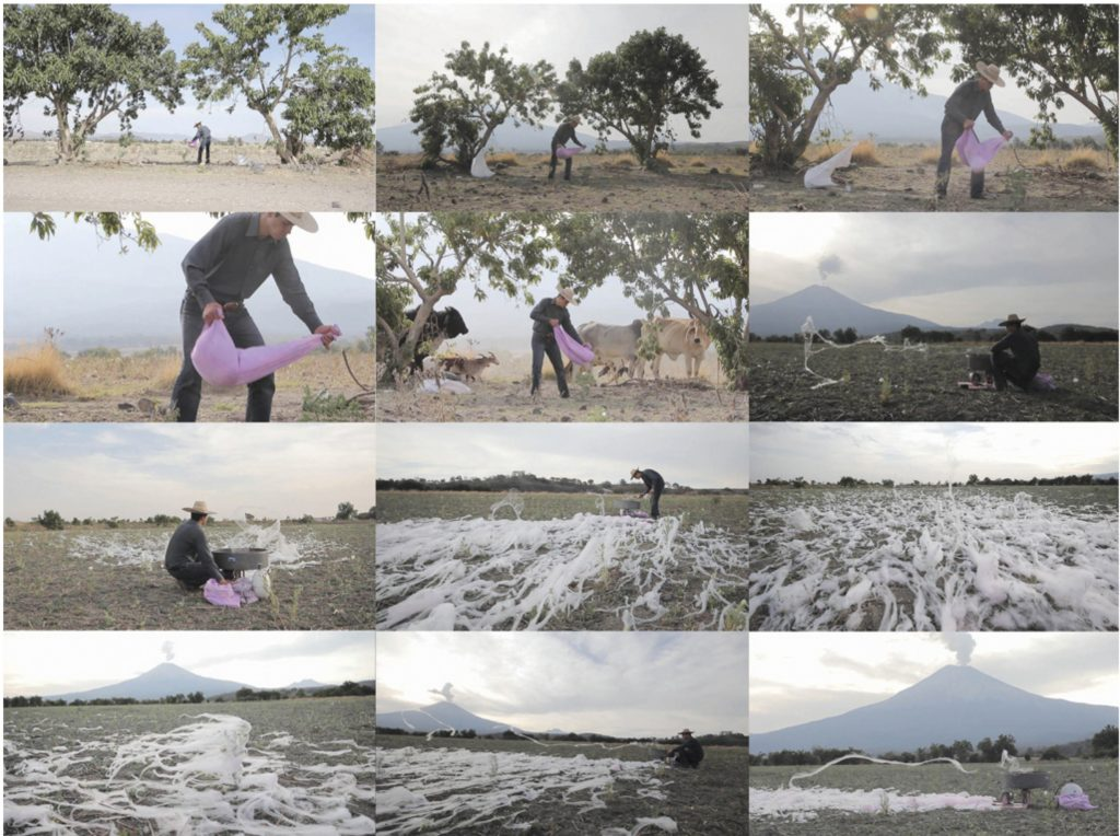 Screenshot of Mauricio Limon video cerniendo azucar, voice and nature in mexico wildpalms