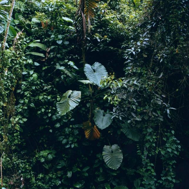 Karen Paulina Biswell @ wildpalms betata Nama Bu Photography