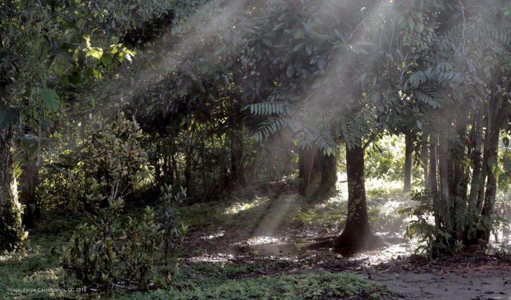 Felipe Castelblanco Nambi Collective video work wildpalms