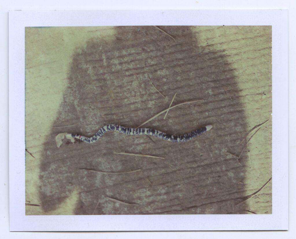 Amazonie snake Karen Paulina Biswell Polaroid wildpalms Colombia photography latinamerican female artist