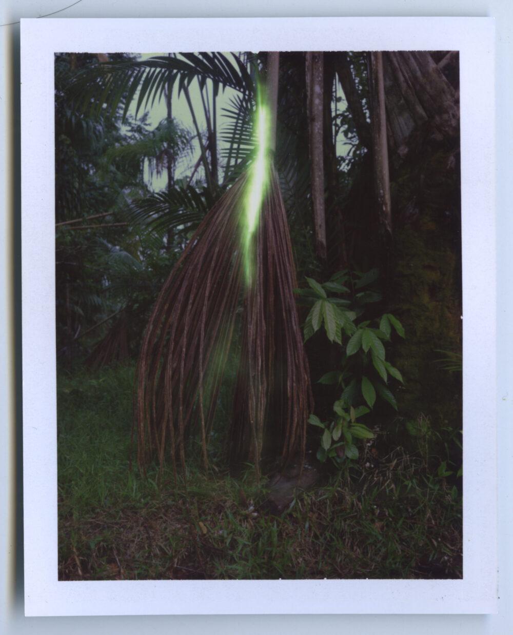 Amazonie Palm tree Karen Paulina Biswell Polaroid wildpalms Colombia photography latinamerican female artist