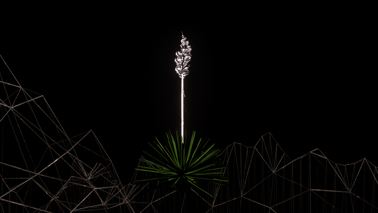 Desert of the voice yucca cherish marquez video work wildpalms exhibition magical operations